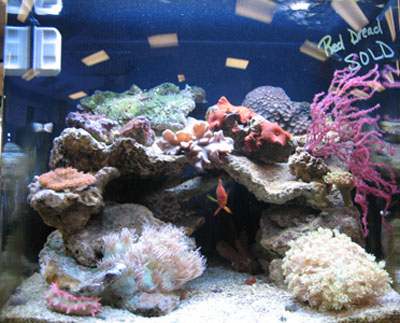 Corals and Reef Supplies