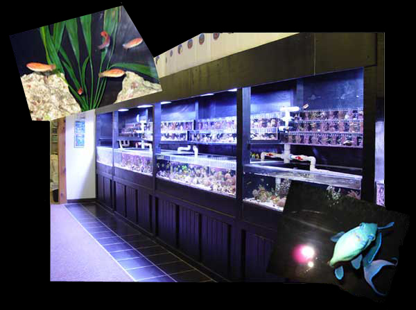 Great Selection, Great Prices, Visit Marine Fish and Reef Today !